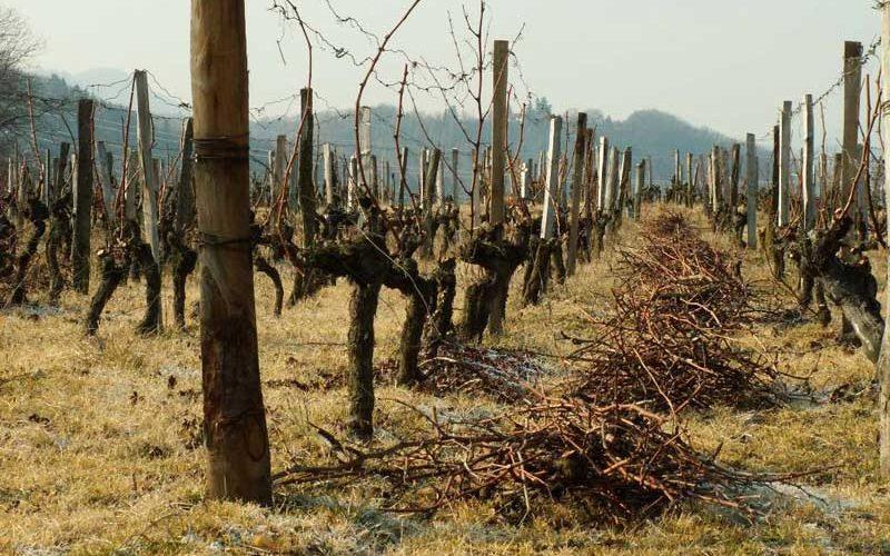 The Marin vineyard